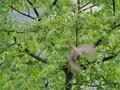 Finch, taking off