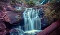 Nature's Beauty