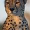 A Cheetah surveys the land at sunrise