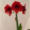 P4301328_redflower_800