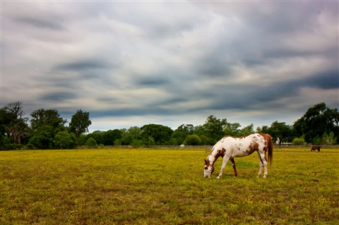 horse on overcast day