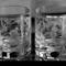 bohemian tumblers f5.6 -20140924 - 2053