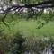 grass water tree