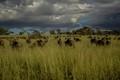 Serengeti, Tanzania, may 2017