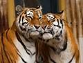 Antwerpen Zoo, Belgium
