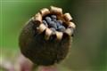 its a pod & its full of seeds.
