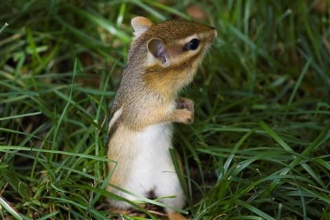 SquirrelStanding_RawToJPEG_IMG_1598