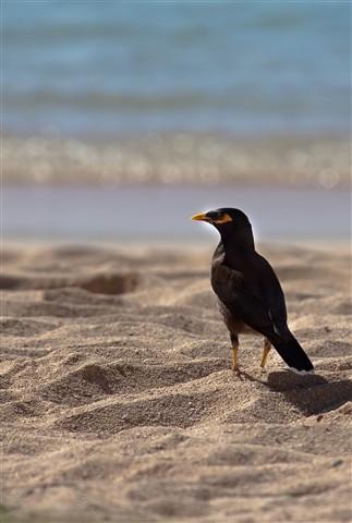 BeachBird-001