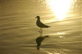20090119_MysteryBay_Seagull1