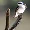 1-Teaneck Birds8