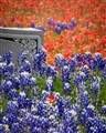 Bluebonnets & Indian Paintbrush in Flat Rock Cemetery