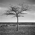 One Brave Tree