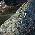 Sea life in Puerto Gallera