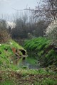 sewage right to the rivulet