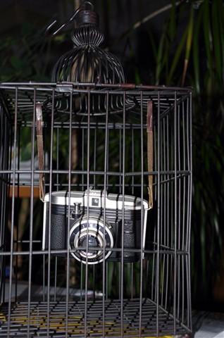 photo birdie