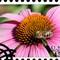 Stamp Purple Cone