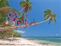 Walking on Coconut Tree