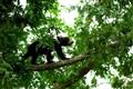 Bear Cub Tree House