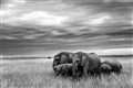Elephants in Masaimara