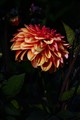 flowers-shadow 151 (2)