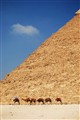 Camel Train in front of the Khafre Pyramid