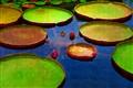 Biltomore Pond