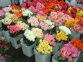 LA Downtown Flower Market