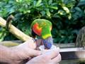 Pretty Bird