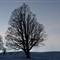 Trees alte saanenmoeserstrasse