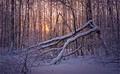 At sunset in winter forest