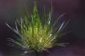 Sparkling Dew Drops
