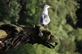 The Seagull and the Gargoyle: An Odd Couple