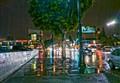 Tree & Traffic