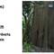 hemsida-sumpcypress-352cm-alnarp