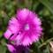 Wildflower_