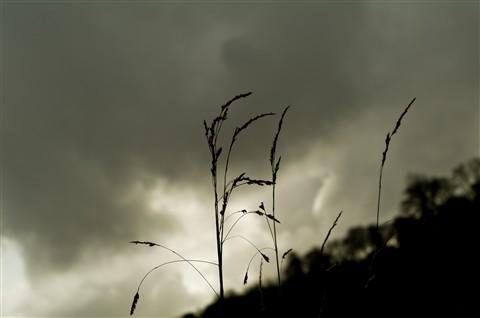 Mono grass.