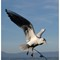A suspended seagull.: