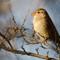 Birds2016-5