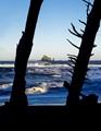 Olympic Wilderness Coast