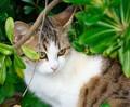 1-Kitten-3
