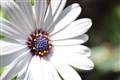 White flower w/purple