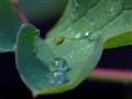 A  cobweb in a begonia leaf
