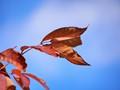 Bright Sunny Fall....