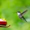 Birds2018-54sm: OLYMPUS DIGITAL CAMERA