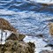 Curlews-On-the-Coast