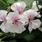 White Nursery Flower