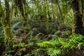 MaltsRest Rainforest