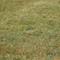 grass no tilt