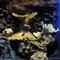 Sea Eels 1