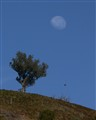 Moonset over hill